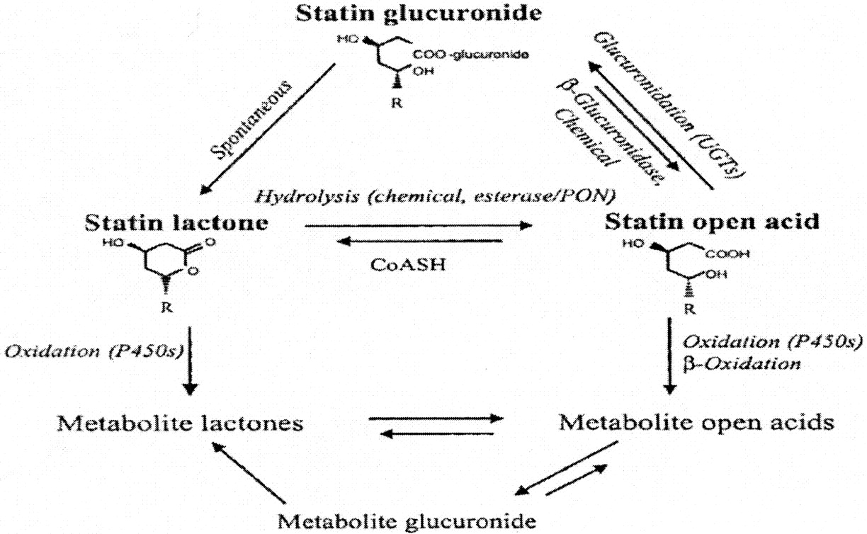 drug interaction between phenytoin and statins Drugs & diseases cme  the interactions of atorvastatin and fluvastatin with carbamazepine, phenytoin and valproate in the mouse maximal.